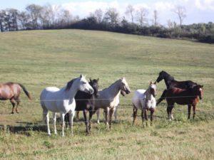 Horses1-600x450